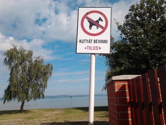 Egyre szigorúbb a kutyákra vonatkozó jogi szabályozás Fotó: rottweilerclub.network.hu
