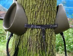 A P-Tree...