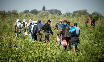Migrants and refugees walk trough a field towards the Hungarian border near the northern Serbian town of Horgos on August 27, 2015. As Hungary scrambles to ramp up defences on its border with Serbia, refugees continued to surge into the country in record numbers, police figures confirmed.  AFP PHOTO / ANDREJ ISAKOVIC