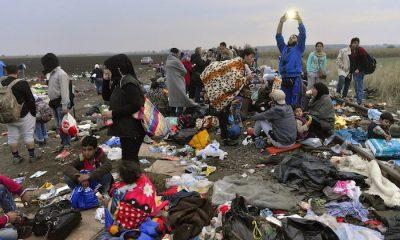 Röszke, 2015. szeptember 11. Migránsok a Röszke melletti gyűjtőponton, a magyar-szerb határ közelében 2015. szeptember 11-én. MTI Fotó: Molnár Edvárd