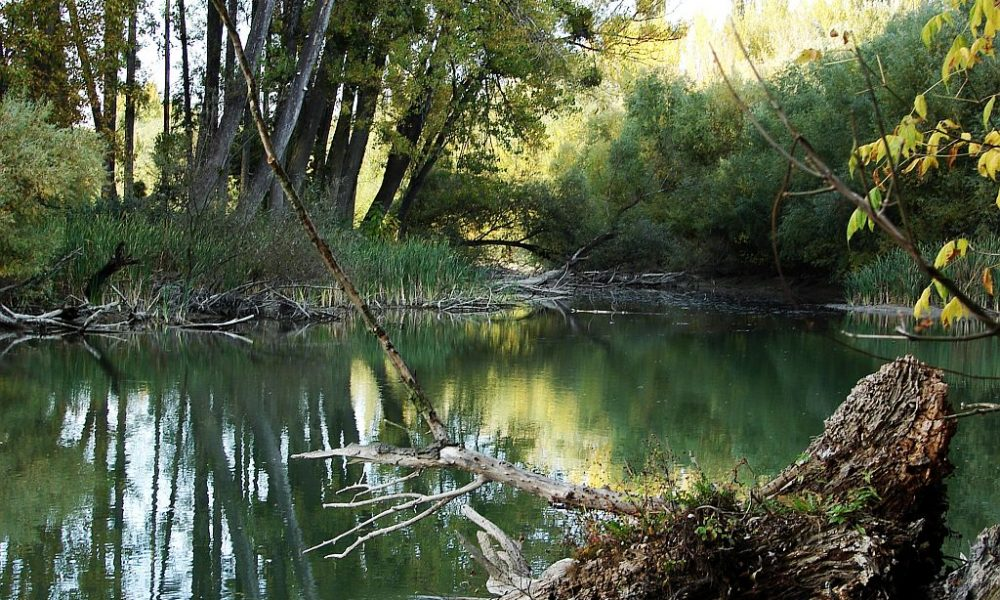 Saját életünket lehetetlenítjük el a vizes élőhelyek beszántásával ... e24bb1d225