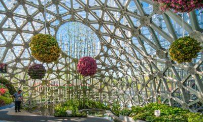 pekingi kertészeti kiállítás