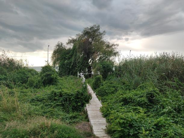 Keskeny fapallón ma is bemehetünk Kádár egykori szigetére, ahol megvan még a fűzfa és az egykori kandeláberek is. A szerző felvétele.